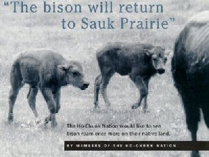 The Bison will Return to Sauk Prairie