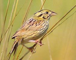 Songs of the Badger Tallgrass Prairie, Part 2