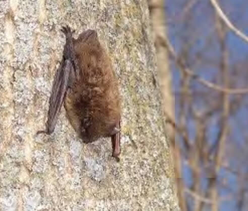 Ho-Chunk Nation Improves Bat Access at Badger